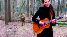 Music with the Wolves